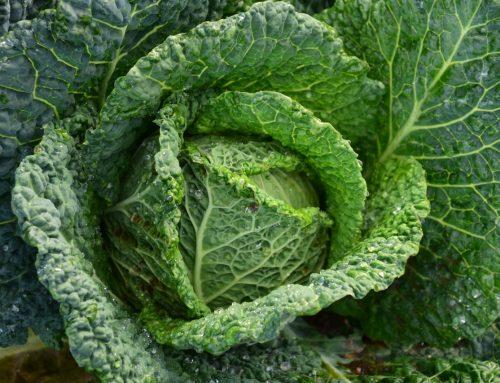 5 tips om verantwoord vegetarisch te eten